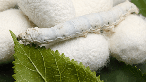Silk protein hydrolysate